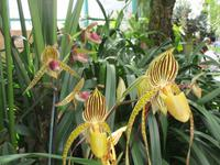 Orchid Foundation