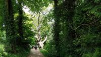 The Lost Gardens of Heligan 20180515 130009