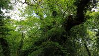 The Lost Gardens of Heligan 20180515 130231