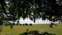 Avebury - Wish Tree - Wunschbaum 20180622 124804