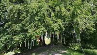 Avebury - Wish Tree - Wunschbaum 20180622 124833