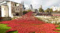 Der Tower mit Keramikmohnblumen für den 11.11.2014