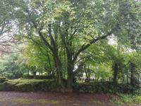 403_Dartmoor