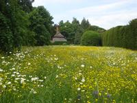 West Dean Garden - Wildblumenwiese
