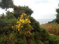 Insel Jersey - Fauna