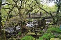 Dartmoor, River Plym