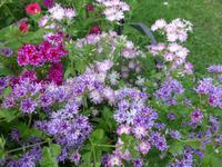 Russland, Baikalsee, Polovinnia, Blumen im