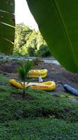 Costa Rica, Rafting Pacuare, Romantik vor dem Start