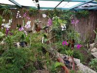 Teneriffa, Puerto de la Cruz, Garten Sitio Litre
