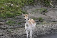 Omega-Wildlifepark - Rotwild