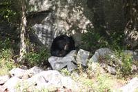 Omega-Wildlifepark - Schwarzbär