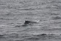 Walbeobachtungsfahrt
