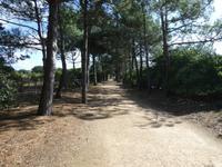Jersey, Corbier Walk