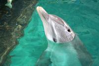 Unser Delfin Cacique