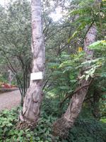 Botanische Garten