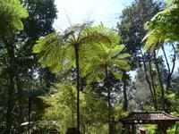 Madeira, Funchal, Tropischer Garten