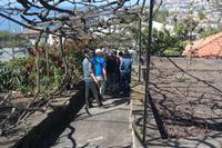 Orchideengarten in Funchal