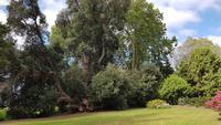 Madeira, Funchal, Palheiro Garden, Neuseeländischer Eisenholzbaum
