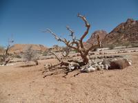 Singlereise Namibia – Erongo Berge