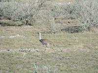 Singlereise Namibia – Etosha Nationalpark