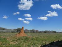 Namibia, unterwegs, Lektion Termitenhügel