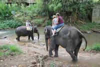 Elefantenritt bei Pinnawela