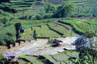 Reisterrassen im Hochland Sri Lankas