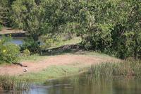 Krokodil im Yala-Nationalpark