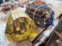 Singlereise Portugal _ Fischmarkt in Lagos