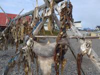 Island, Hvammstangi