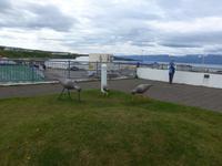 Island, Husavik