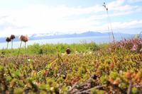 Island - Halbinsel Tjörnes