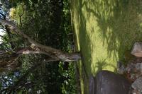 67 Botanischer Garten in Victoria