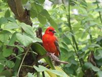 Seychellen Vögel