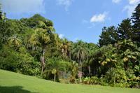 viel grün im botanischen Garten von Victoria