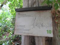 Dschungelpfad im Tropical Islands