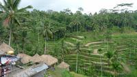 Reisterrassen bei Ubud