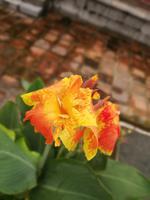Farbenfrohe Blüte beim Grabmal von König Tu Duc