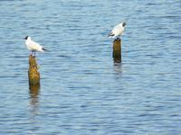 Vögel im Prerowstrom