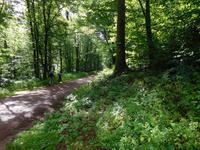 Wanderung auf dem Holzweg rund um Eisenach