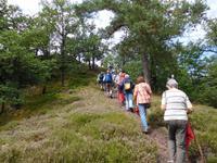 Wanderung mit dem Revierförster auf dem Holzweg rund um Eisenach
