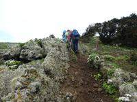 Spanien, El Hierro, Wanderung Sabinas