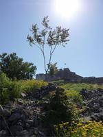 die Burgruine von Molivos