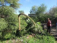 ein üppiger Garten