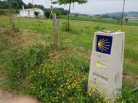 Single-Wanderreise in Nordspanien mit San Sebastian – Picos de Europa – Jakobsweg – Santiago de Compostela – Atlantikküste – Porto (422)