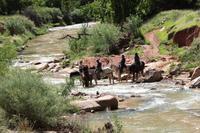 Spaziergang im Zion-Nationalpark