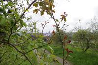 Weinverkostung am Schloss Proschwitz