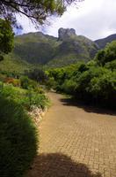 Kirstenbosch - Botanischer Garten
