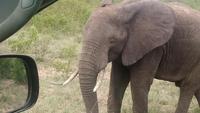 Elefant im Krugerpark