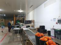 Sagres Mandarinen Fabrik